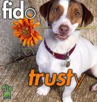 Fid-trust